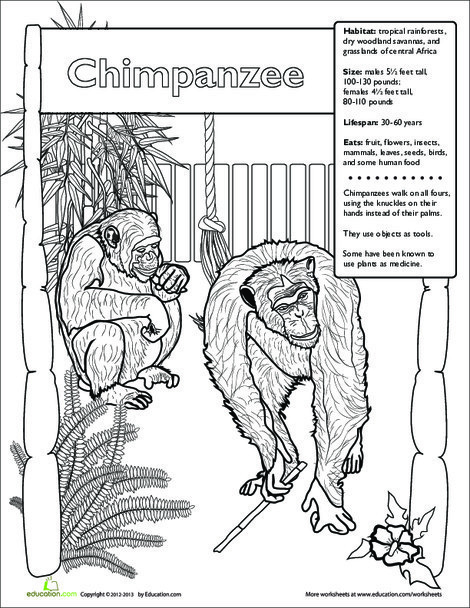 Second Grade Science Worksheets: Chimpanzee