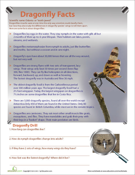 Fourth Grade Science Worksheets: Dragonfly Facts