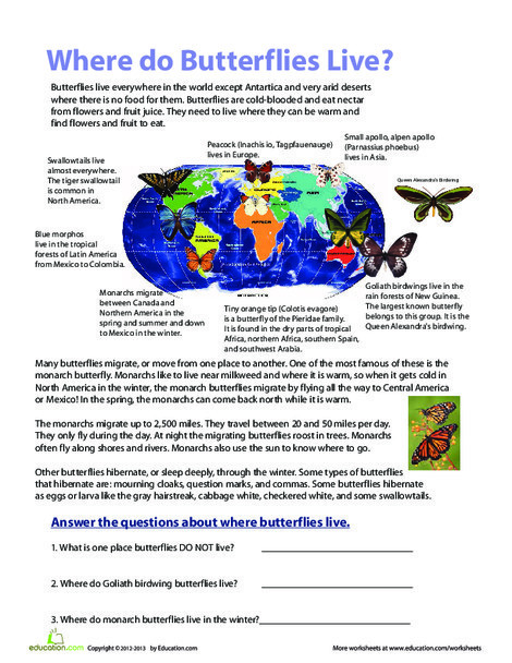 Fourth Grade Science Worksheets: Where Do Butterflies Live?