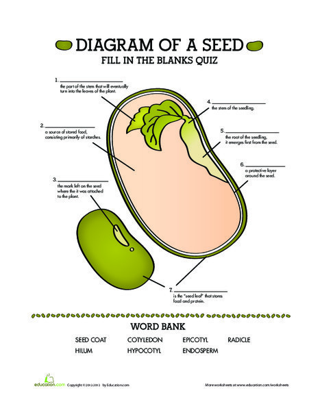 Fifth Grade Science Worksheets: Parts of a Seed: Quiz