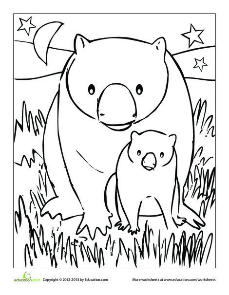 Kindergarten Coloring Worksheets: Wombat Coloring Page