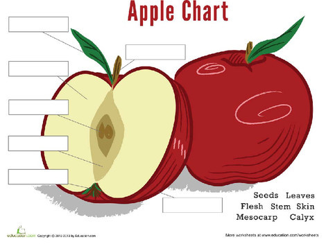 First Grade Science Worksheets: Parts of an Apple