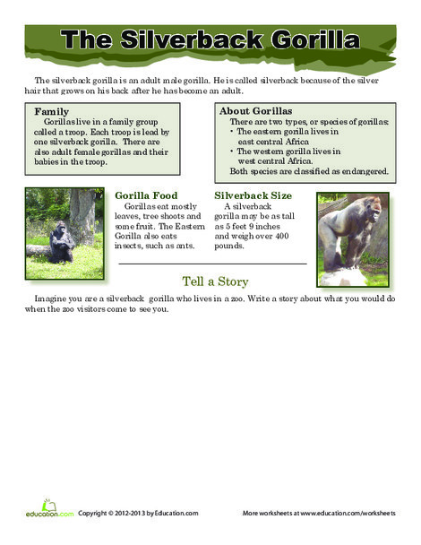 Third Grade Reading & Writing Worksheets: Silverback Gorilla Facts
