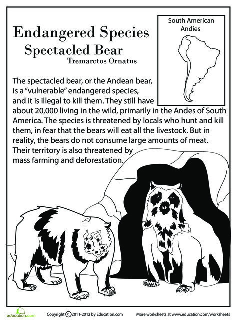 Fourth Grade Reading & Writing Worksheets: Endangered Species: Spectacled Bear