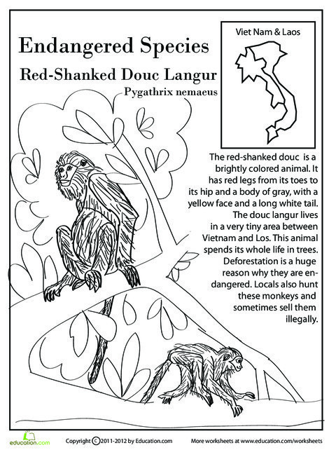 Fourth Grade Reading & Writing Worksheets: Endangered Species: Red-Shanked Douc Langur