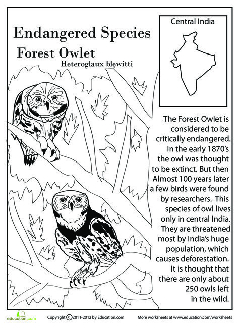 Fourth Grade Reading & Writing Worksheets: Endangered Species: Forest Owlet