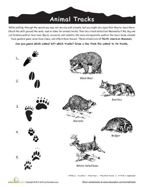 Third Grade Science Worksheets: Animal Tracks