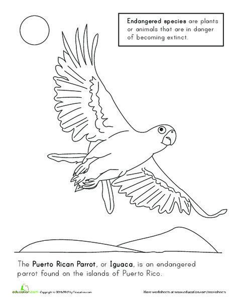 Kindergarten Coloring Worksheets: Puerto Rican Parrot Coloring Page