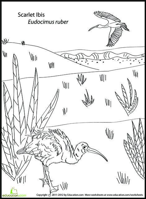 First Grade Coloring Worksheets: Scarlet Ibis