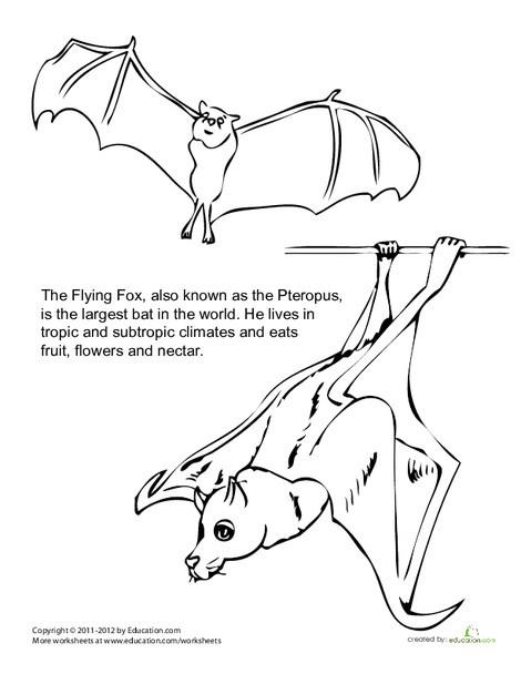 Second Grade Coloring Worksheets: World's Largest Bat