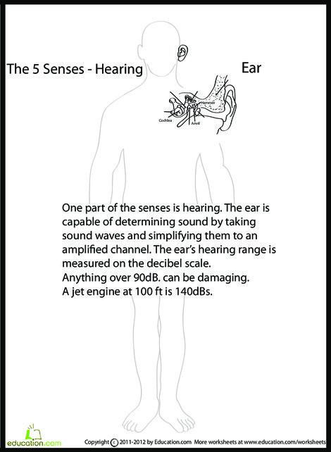 Fifth Grade Science Worksheets: Human Anatomy: Ear