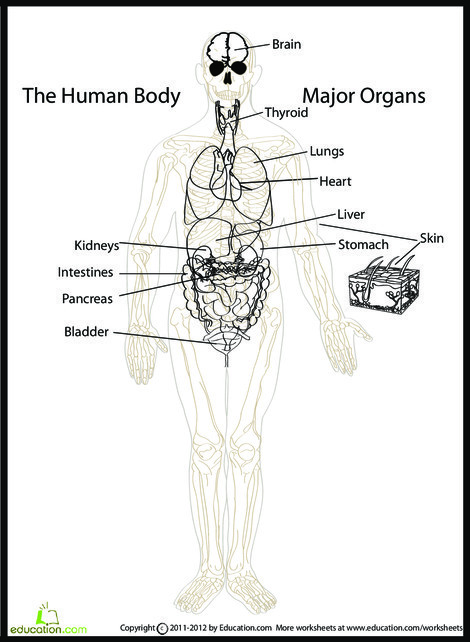 Fifth Grade Science Worksheets: Human Body Diagram