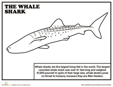 First Grade Reading & Writing Worksheets: Whale Shark Coloring Page