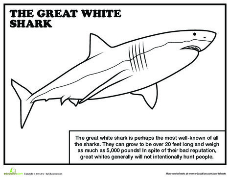 First Grade Reading & Writing Worksheets: Great White Shark Coloring Page