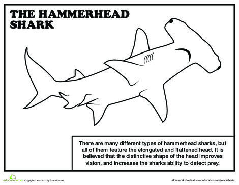 First Grade Reading & Writing Worksheets: Hammerhead Shark Coloring Page