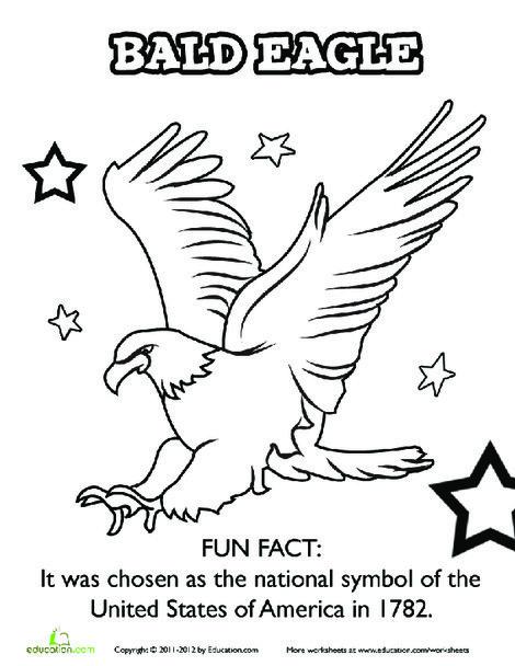 First Grade Social studies Worksheets: American Bald Eagle