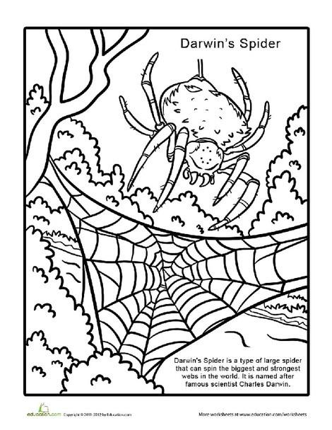 Second Grade Coloring Worksheets: New Species: Darwin's Spider