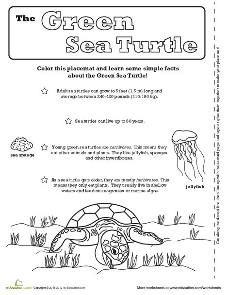 First Grade Coloring Worksheets: Sea Turtle Activity Placemat