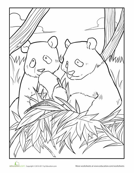 First Grade Coloring Worksheets: Giant Panda Coloring Page