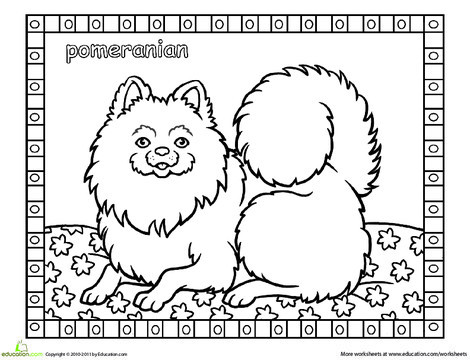 First Grade Coloring Worksheets: Color the Pomeranian