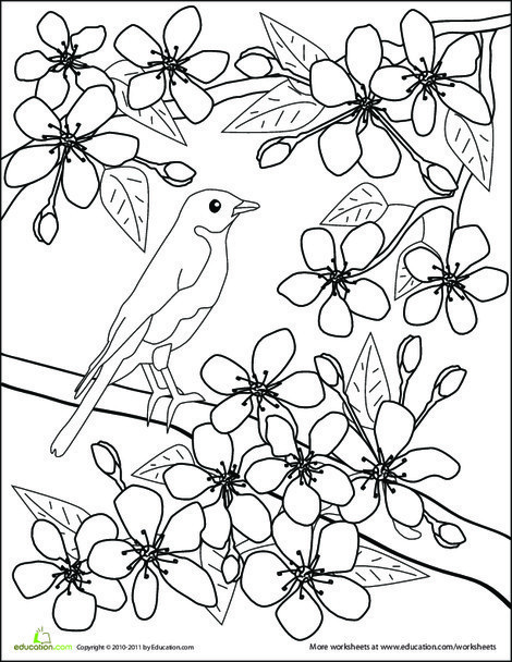 First Grade Coloring Worksheets: Color the Flowers: Cherry Blossoms