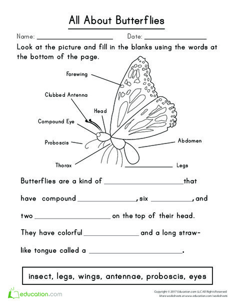 First Grade Reading & Writing Worksheets: All About Butterflies