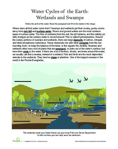 Third Grade Science Worksheets: Wetlands and Swamps