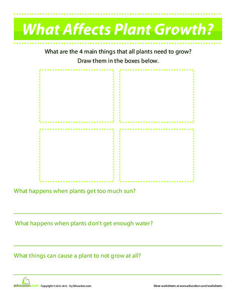 First Grade Science Worksheets: What Affects Plants Growth?