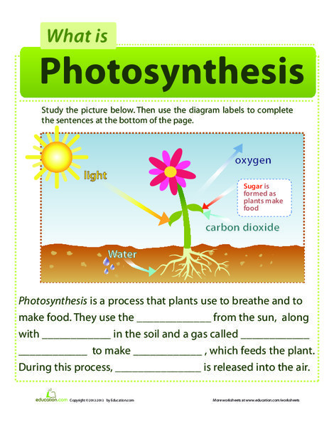 First Grade Science Worksheets: Photosynthesis for Kids