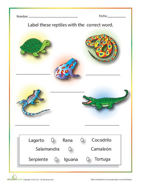 Fourth Grade Foreign language Worksheets: Spanish Reptiles