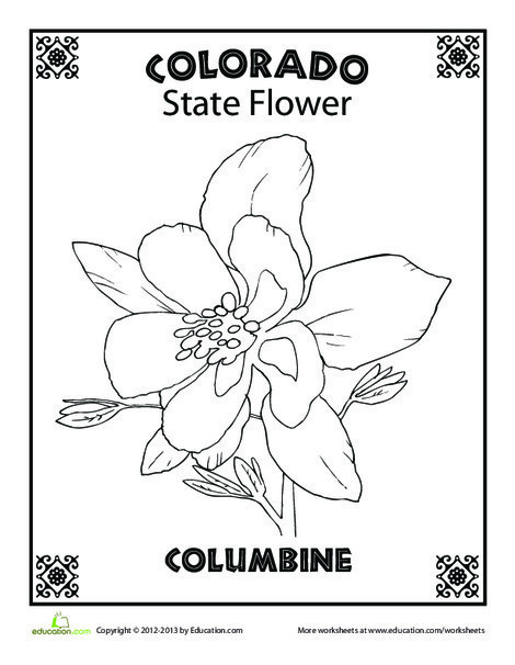 First Grade Coloring Worksheets: Colorado State Flower