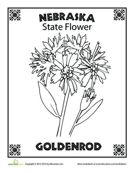 First Grade Coloring Worksheets: Nebraska State Flower