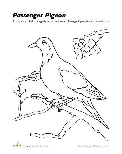 Second Grade Coloring Worksheets: Passenger Pigeon