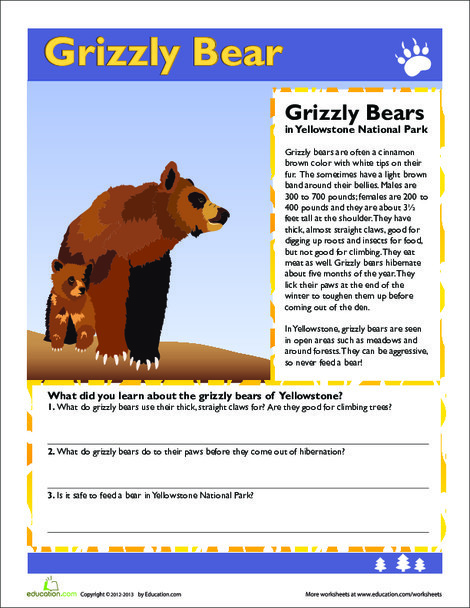 Third Grade Science Worksheets: Grizzly Bear