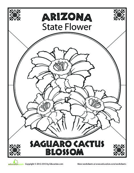 First Grade Coloring Worksheets: Arizona State Flower
