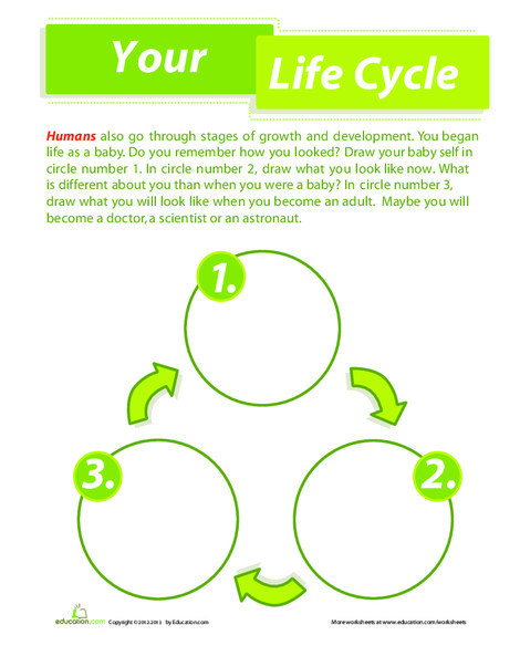 Second Grade Science Worksheets: Human Life Cycle