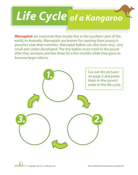 Second Grade Science Worksheets: Life Cycle of a Kangaroo