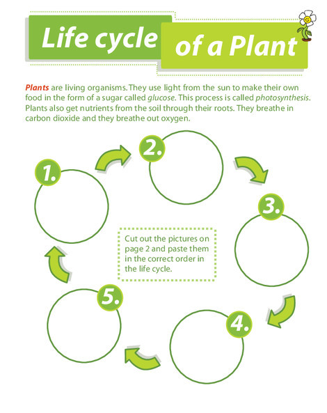 Second Grade Reading & Writing Worksheets: Life Cycle of a Plant