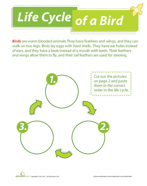 Second Grade Science Worksheets: Life Cycle of a Bird
