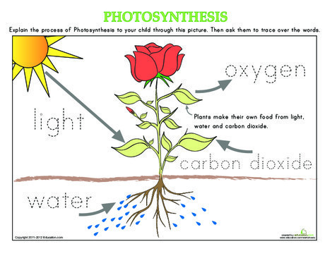 Kindergarten Science Worksheets: How Plants Grow