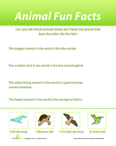 First Grade Science Worksheets: Animal Fun Facts