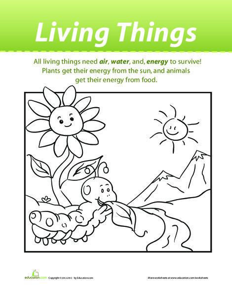 Preschool Science Worksheets: Living Things