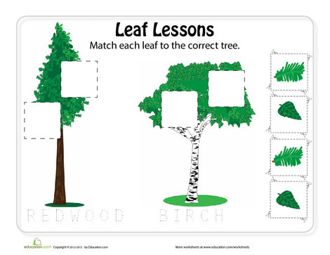 Preschool Science Worksheets: Matching Types of Leaves