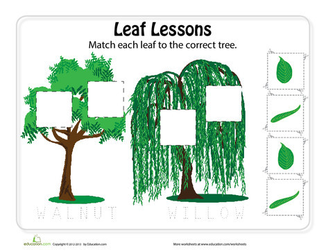 Preschool Science Worksheets: Matching Leaves