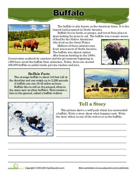 Third Grade Reading & Writing Worksheets: Buffalo Facts