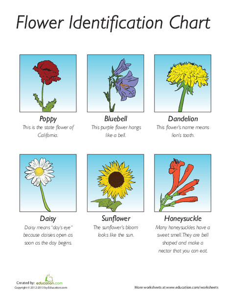 First Grade Science Worksheets: Flower Identification