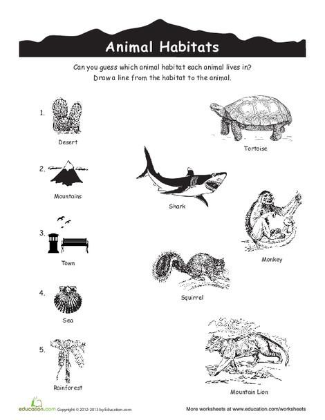 Kindergarten Science Worksheets: Animal Habitats Match-Up