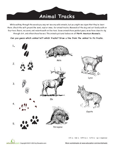 Third Grade Science Worksheets: North American Animal Tracks