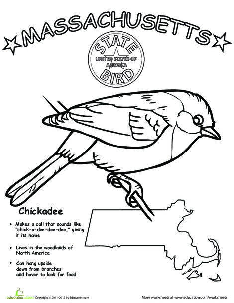 First Grade Coloring Worksheets: Massachusetts State Bird