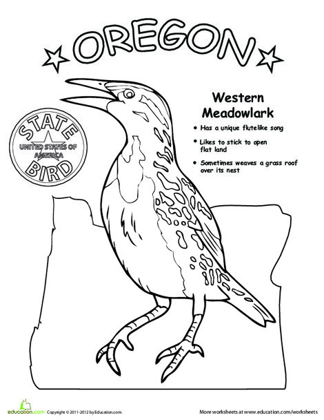 First Grade Coloring Worksheets: Oregon State Bird